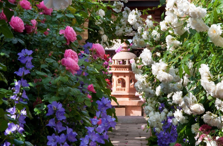 Stop les roses ! Ne soyez pas si pressées de fleurir…
